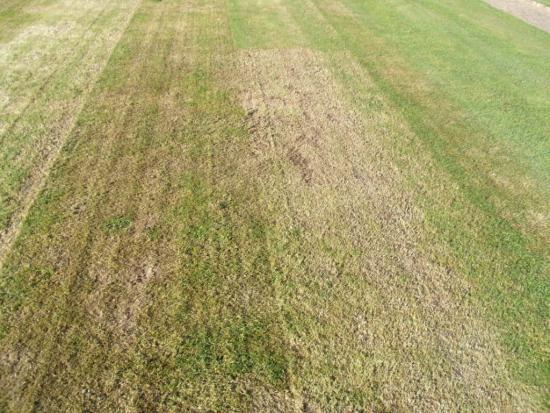 R fection de la pelouse du stade municipal for Refection pelouse prix